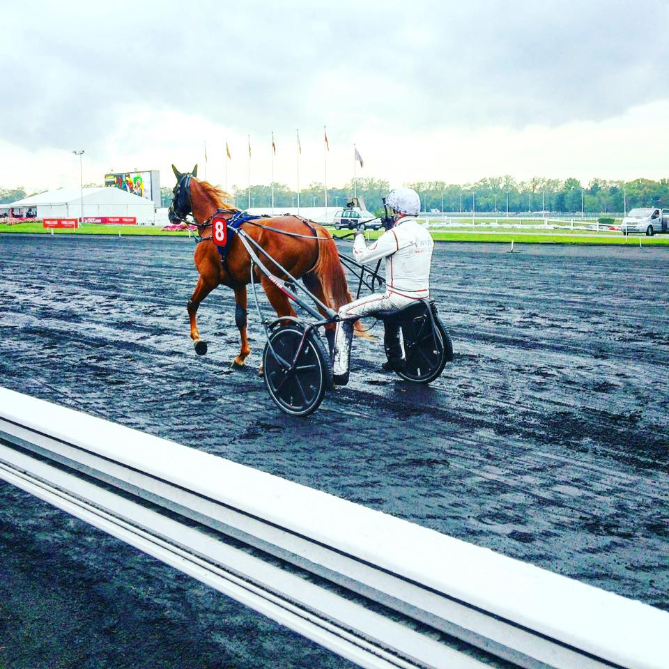 Vincennes hippodrome jokey sulky driver turf jockeyclub trot course